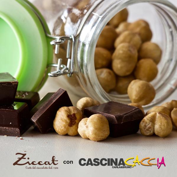 ziccat1
